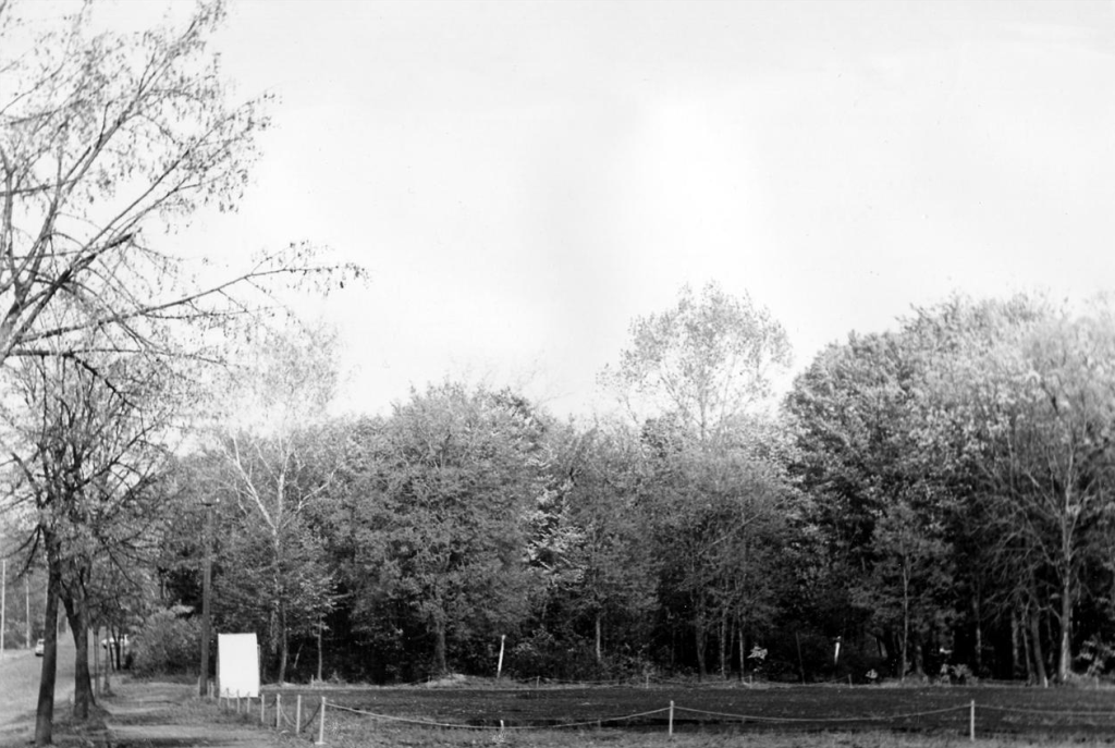 Niestachowska łąka 2