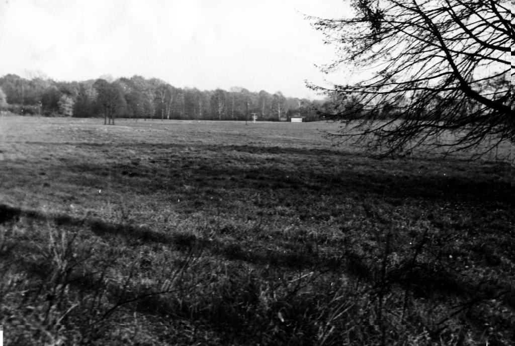 Niestachowska łąka